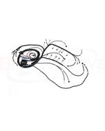 BP AUTOMOTIVE STANDALONE HARNESS - 99-02 VORTEC - DBC - 4L80E - H305